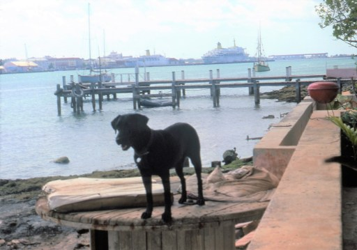 Condor looking out over Nassau Harbour