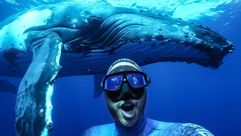 Selfie with a humpback whale