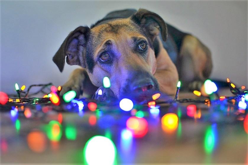 Dog Christmas lights