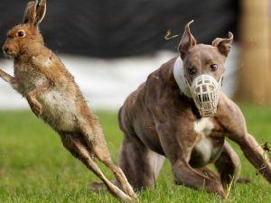 reporting animal cruelty in the UK