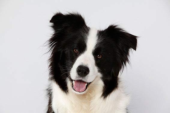Welcher Hund Passt Zu Mir? Unsere Tipps