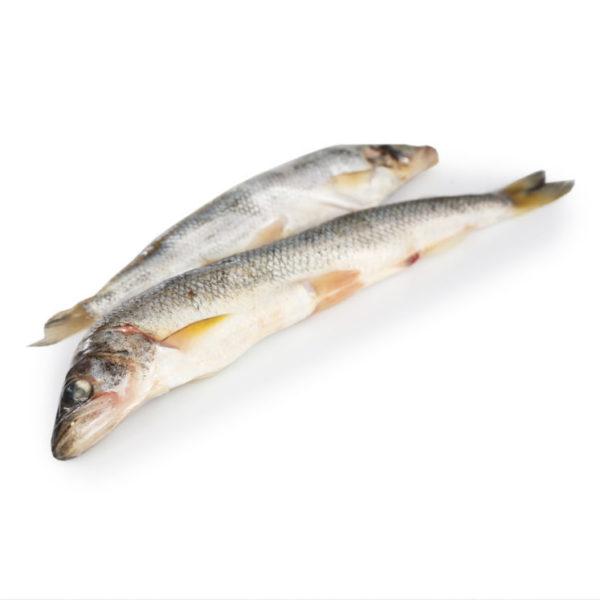 Πολλά περισσότερα ψάρια που χρονολογούνται ασημένια λίμνη
