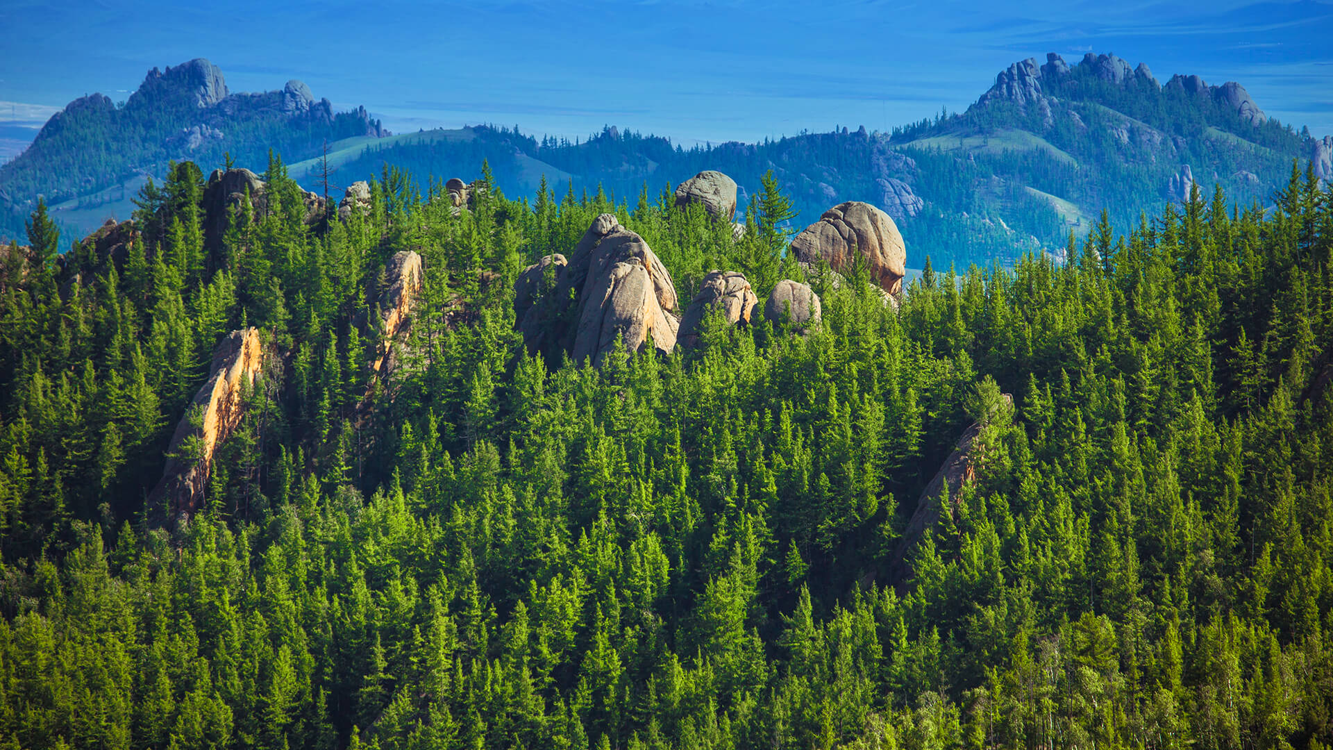 temperate forest and taiga