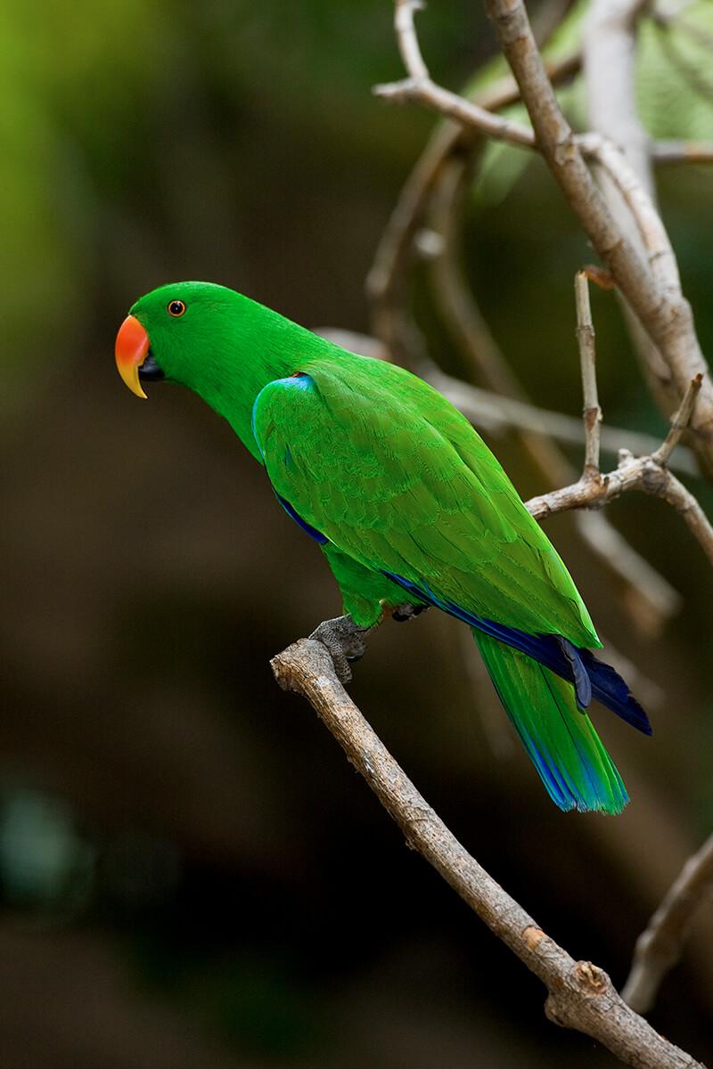 parrot san diego zoo