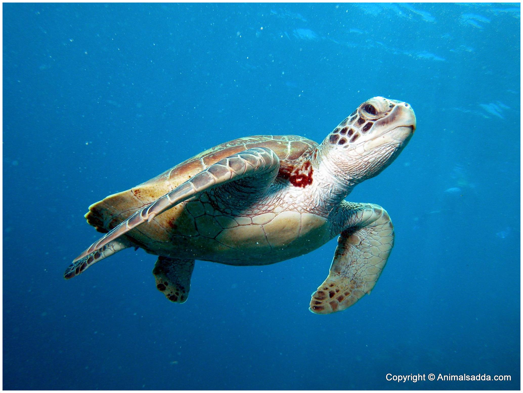 sea turtle life cycle diagram honda civic ignition wiring green food web foodstutorial org