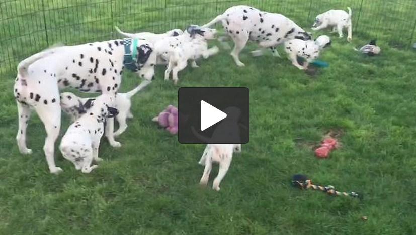 Petsmart Milford Dog Adoption