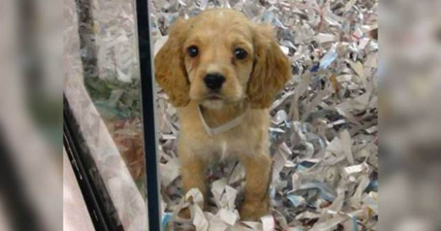 California Pet Stores Now Restricted To Only Selling ...