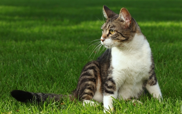History Of Cats  How Did Cats Become Our Pets?  13