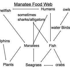 Taiga Food Web Diagram Mercedes Benz Sprinter Radio Wiring West Indian Manatee Facts, Habitat, Diet, Adaptations, Pictures