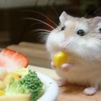 What Do Hamsters Eat | What To Feed Hamsters