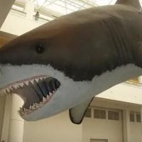 Megalodon Shark Facts | Megalodon Shark Diet & Habitat