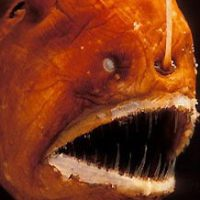 Angler Fish Facts For Kids | Angler Fish Diet & Habitat