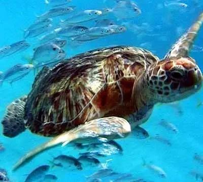 Turtle Facts For Kids  Turtle Behavior Diet Habitat and