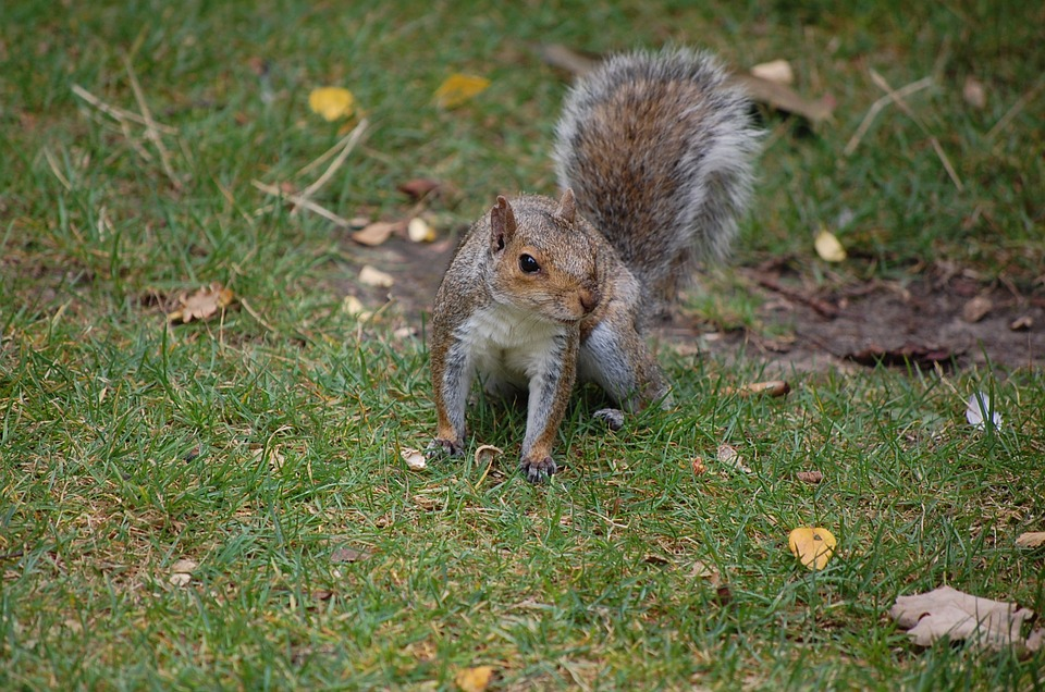 squirrels animal trackers wildlife