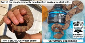 water snake vs copperhead
