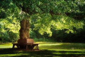 Erinnerungsbaum Animal Tree