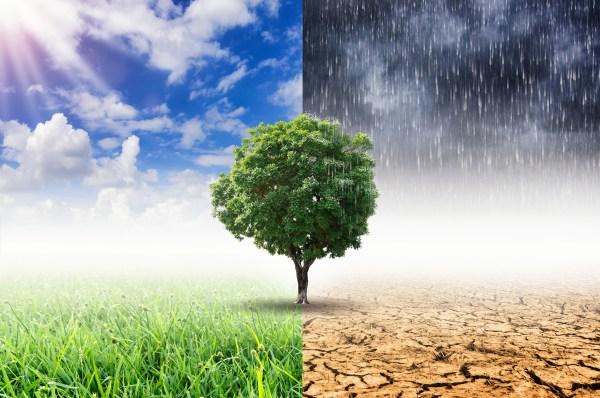 Animal Tree Bäume pflanzen Klima retten mit Tierbestattung