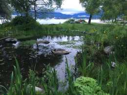 A picture of the bird marsh at CRAB Park at Portside. There is a shallow freshwater pool with lush green foliage surrouding it and a view of the Burrard inlet in the backround