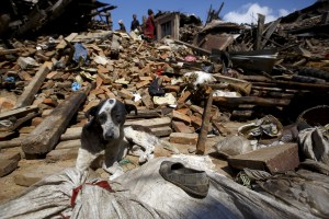 A dog sits in front of a mound of rubble of collapsed houses after Saturday's earthquake in Bhaktapur, Nepal April 27, 2015. REUTERS/Navesh