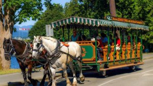 stanley-horse-carriage