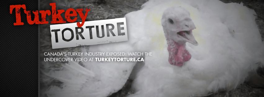 turkeytorturecover