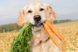 vegetarian_dog