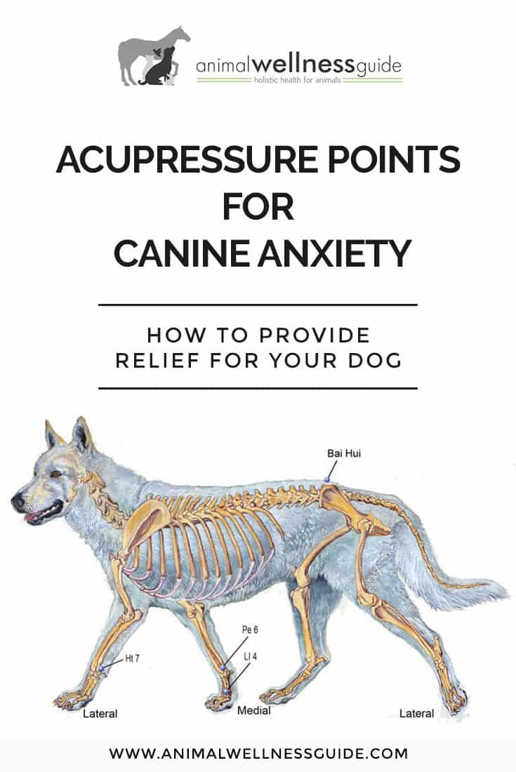 Canine Anxiety Acupressure Session | Animal Wellness Guide