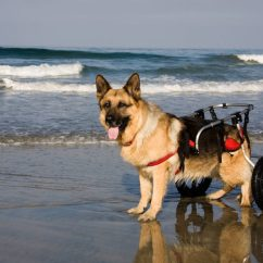 Wheelchair Dog Inner Balance Zero Gravity Chair Moving Again With Carts And Wheelchairs Animal Wellness For Dogs
