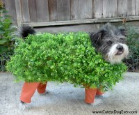 20 Cutest Halloween Dressed Up Pets  AnimalWhoop