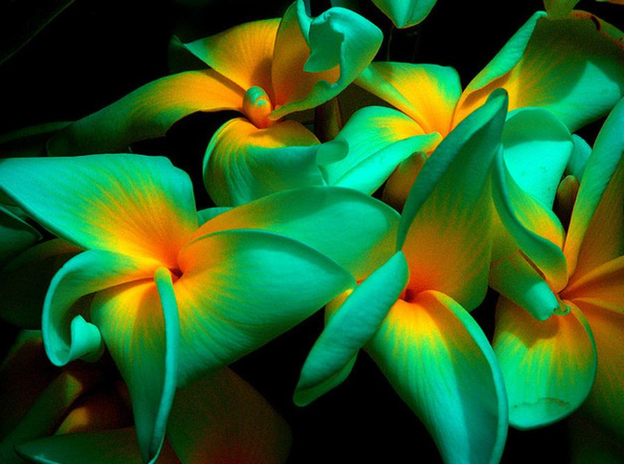 Flowers Guam Plants And