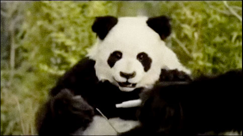 Panda in Just Eat TV ad