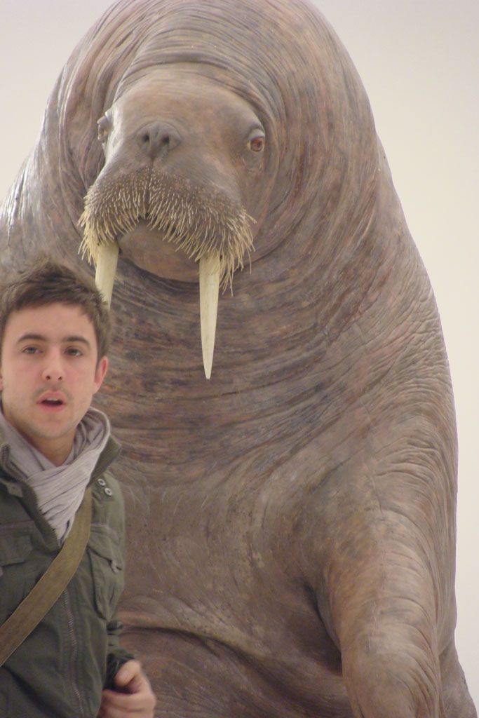 still from ad featuring life size animatronic walrus