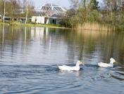 Familienurlaub in Holland mit Center Parcs