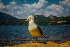 Чайка на берегу Борового