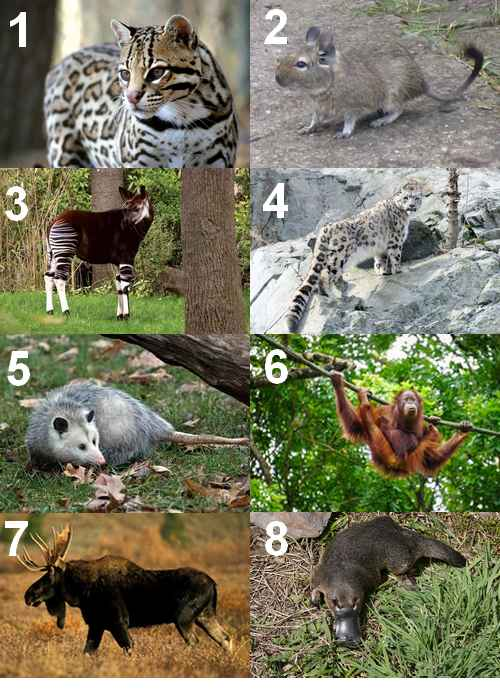 Animal Qui Commence Par U : animal, commence, Animal, Commence