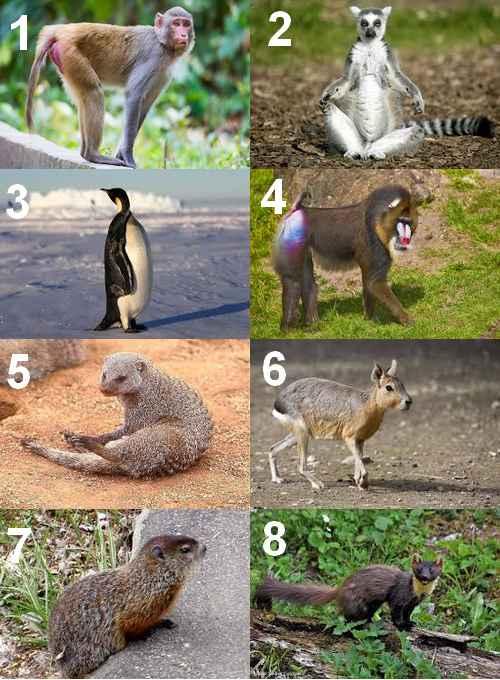 Animal Qui Commence Par U : animal, commence, Animal, Voici, Liste, Complète, Animaux