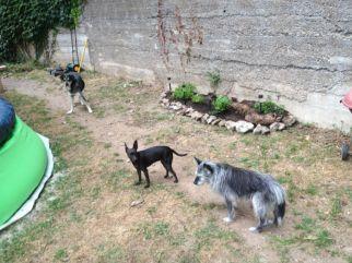 Tezen a la chance d'avoir un jardin