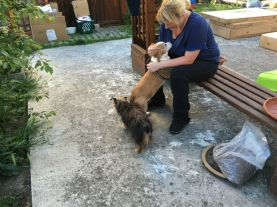 Lynda fait une petite pause en bonne compagnie, Daisy et Bogos :-)