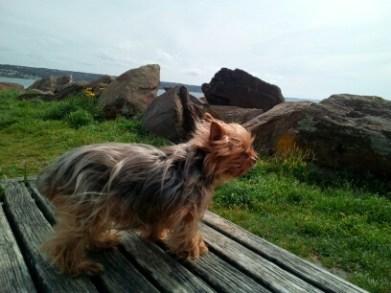 Uryanne découvre la mer