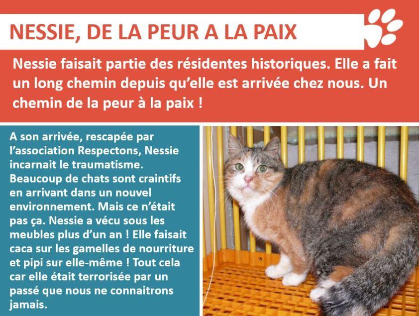 Nessie 0