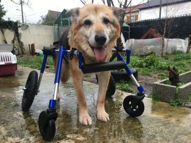 Moumou a été sauvé in-extremis, après 15 ans à l'attache. Ses pattes cassées (par les coups ?) n'avaient jamais été soignées... Il a vécu une fin de vie pleine de bonheurs ❤