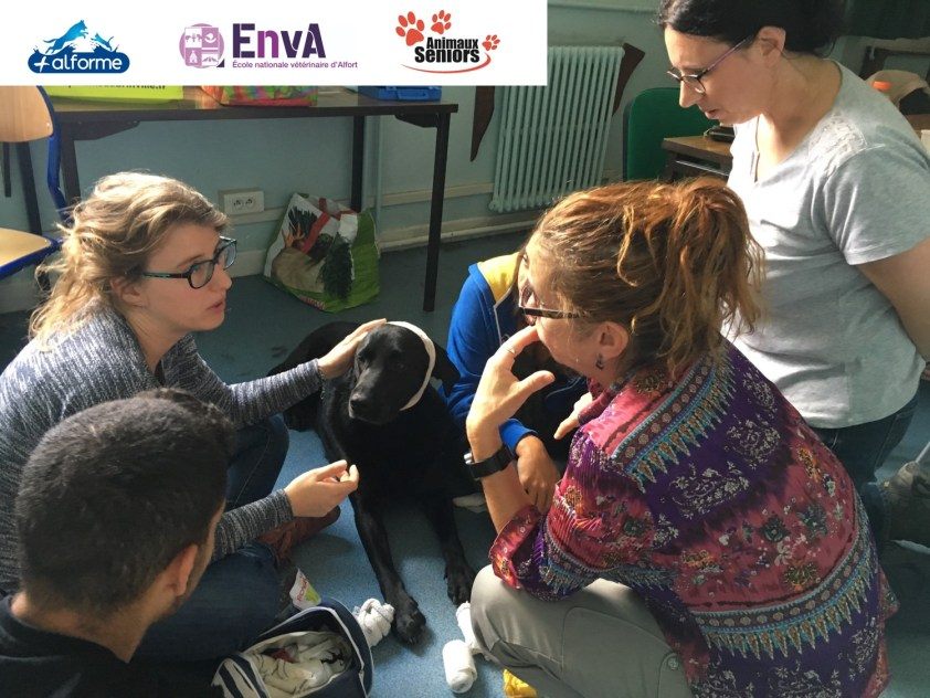 formation premiers secours animaux 1
