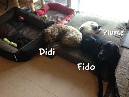 Plume aime aussi les chiens ! Avec Fido (qui nous a quittés en 2018) et Didi, ils formaient un trio inséparable.