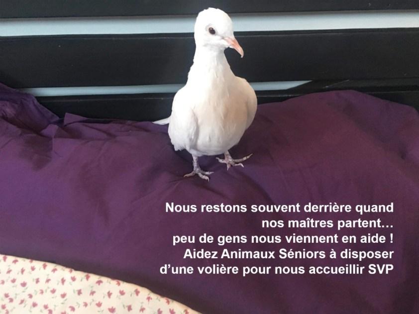Léon_wp3.jpg