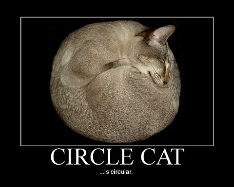 Smile Its Circle Cat CHECK OUT OUR BLOG