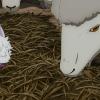 【アニメ】FGO6話感想・考察・解説!クタに魔獣が近づかない理由【Fate/Grand Order -絶対魔獣戦線バビロニア-】
