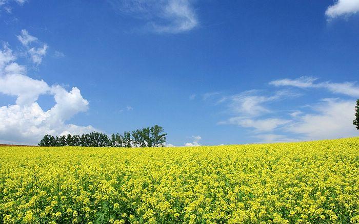 Japan foto: Sommer mark i Hokkaido