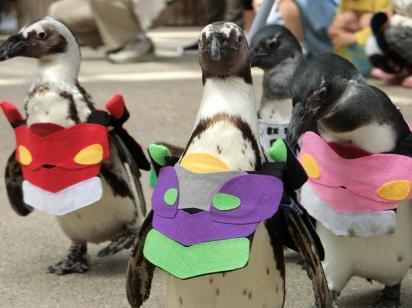 Evangelion pingviner på parade