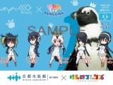 Kemono Friends' PPP samarbejder med rigtige pingviner i Kyoto Aquarium