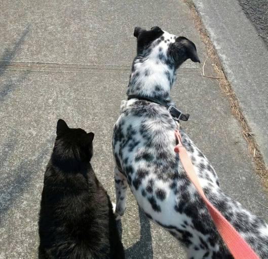 Darwin and Domino